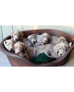 Weims in a basket