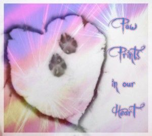 Paw Prints in our heart- dogs