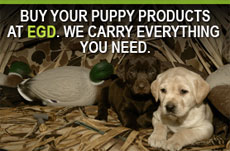 Everything Gun Dog Hunting Dog Products And Supplies