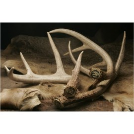 Genuine Shed Antler (small) by Dokken Shed Dog Trainer SA-ATS